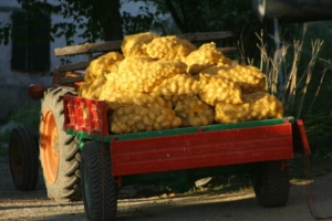 patate 2